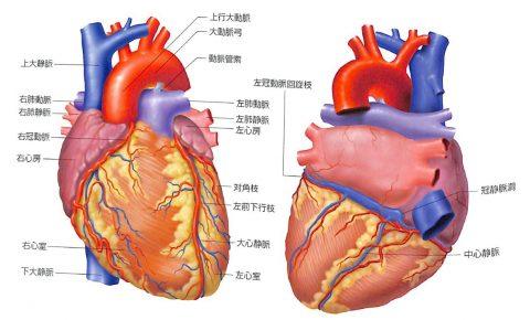 冠動脈01
